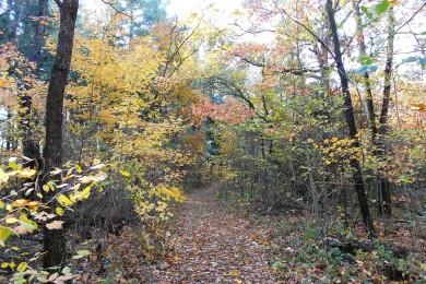 Trail 5_101812